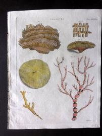 Encyclopedia Britannica 1801 Hand Col Print. Zoophytes. Coral 579